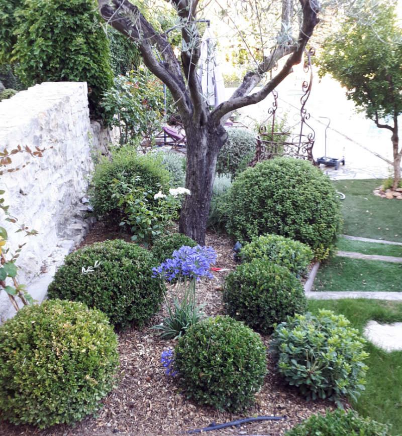 Couvre sols Beaumont Paysages jardinier paysagiste